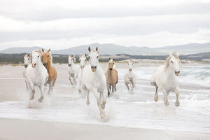 White Horses Mural (SKU 8-986) Unleash your free spirit with this horse wall mural. White horses run free on the beach, splashing in the water.