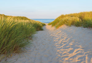 Sandy Path Wall Mural-a sandy path bordered by grass leads to the ocean,