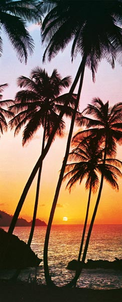 Sunny Palms Wall Mural-The sun fades into the sea while casting a golden glow upon the horizon with palm trees growing in the foreground in this tropical mural.