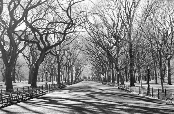 Poets Walk NY Wall Mural-black and white picture of a tree lined path.