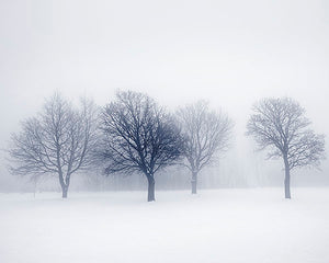 Winter Trees Wall Mural (SKU WALS0200) This winter wall mural is a peaceful scene. The bare trees merge with the mist filled background.