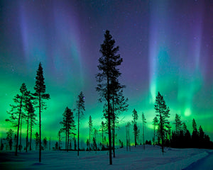 Aurora Borealis/ Northern Lights Wall Mural-Tree silhouettes stretch up into the beautiful blue and green sky.