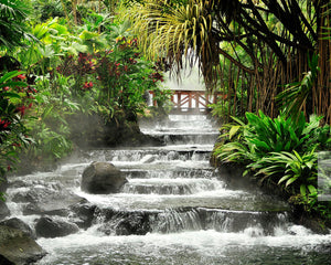 Tranquil Waterfall Wall Mural-A river cascades down in a series of waterfalls through a rainforest.