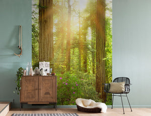 Redwood Wall Mural-The warm rays peek through the crown of the trees. hung in hallway