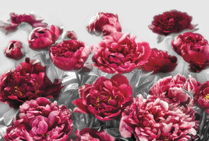Temptation Wall Mural-mixture of fuchsia red flowers on a black and white background