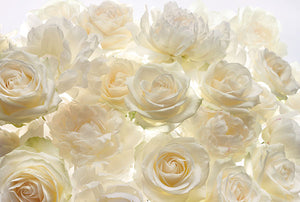 Ivory Rose Wall Mural-bouquet of ivory roses