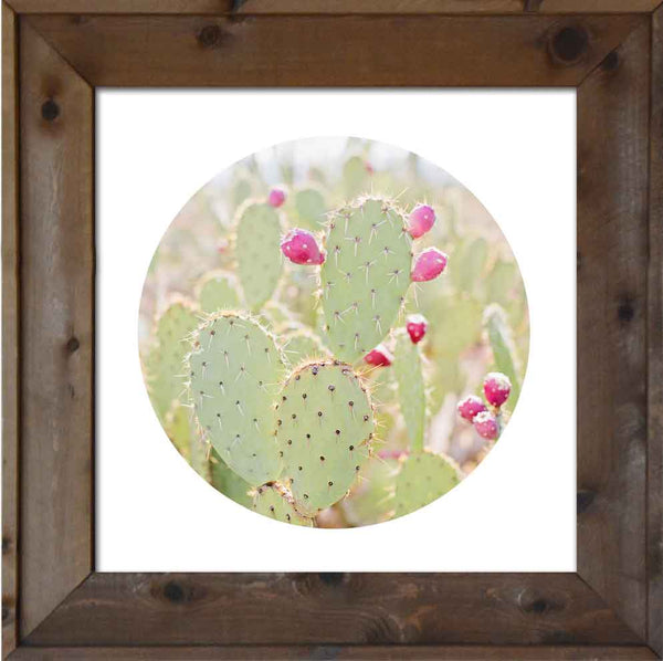 Prickly Pear Round