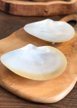 Shell Dish - Small - AMĒNAH