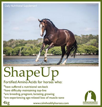 Calm Healthy Horses Shape Up