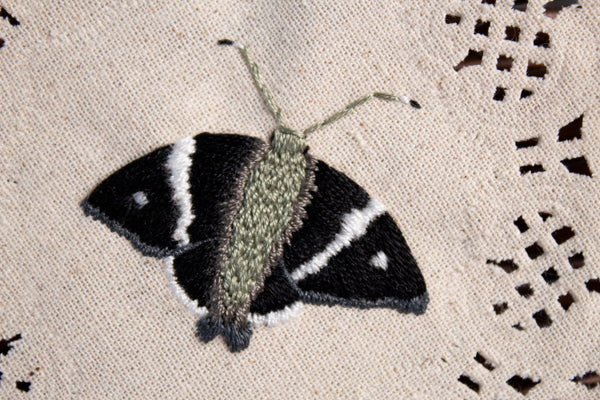Spike Banded Skipper Embroidered Moth