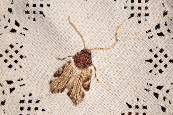 Wood-Colored Apamea Embroidered Moth