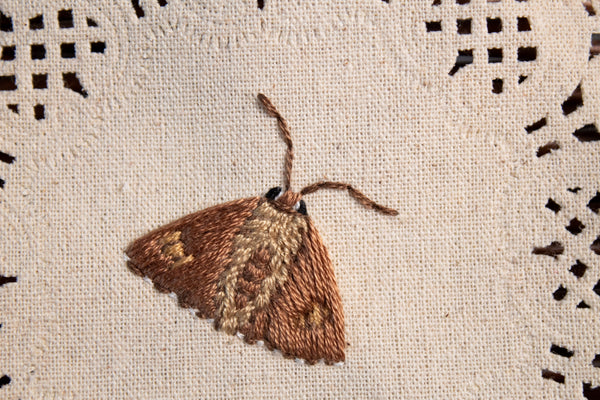Silver Spotted Skipper Embroidered Moth