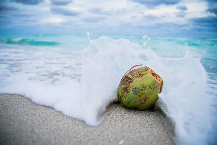 Coco Local! The Benefits of Tropical Coconut, Right Here at the Soap Opera Company