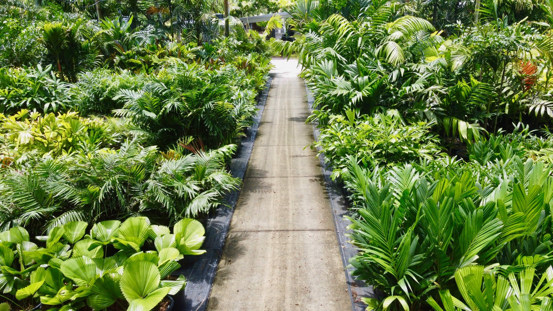 Sunshine Coast Plant Tips
