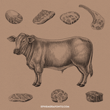 Cow Beef Set Hand Draw Vintage Engraving Style 01