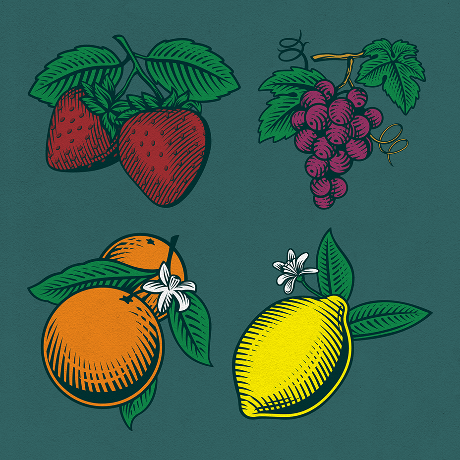 Random Fruit Illustrations 01