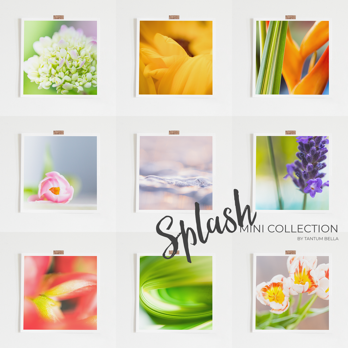 MINI PRINT COLLECTION - SPLASH