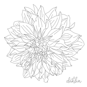 Dahlia Colouring Page - Free Download