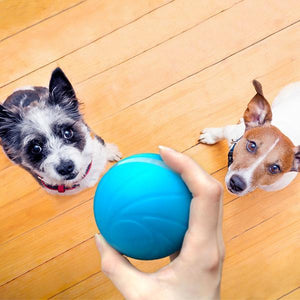 【Hot Sale】🎉🎉New Listing: Motion Ball Smart Pet Toy, 60% OFF only today