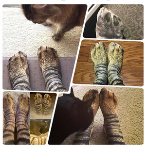 New 3D Animal Paw Socks(One Size Fits All)
