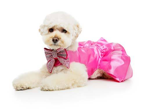 Dog Dress Pink Luxury Australia Made