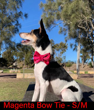 Magenta Dog Bow Tie Small Australia Made