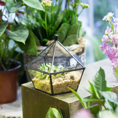 Terrarium plante tropical