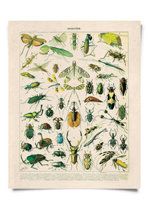 11x14 Print French Insects - Tigertree