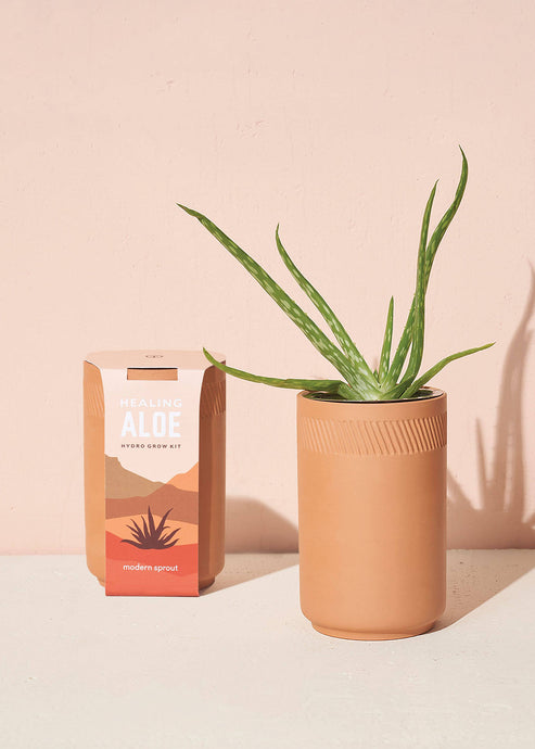 Terracotta Kit - Aloe - Tigertree