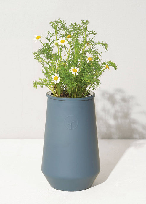 Tapered Tumbler Chamomile - Tigertree
