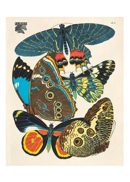 8x10 Print Butterfly Seguy - Tigertree