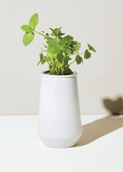 Tapered Tumbler - Mint - Tigertree