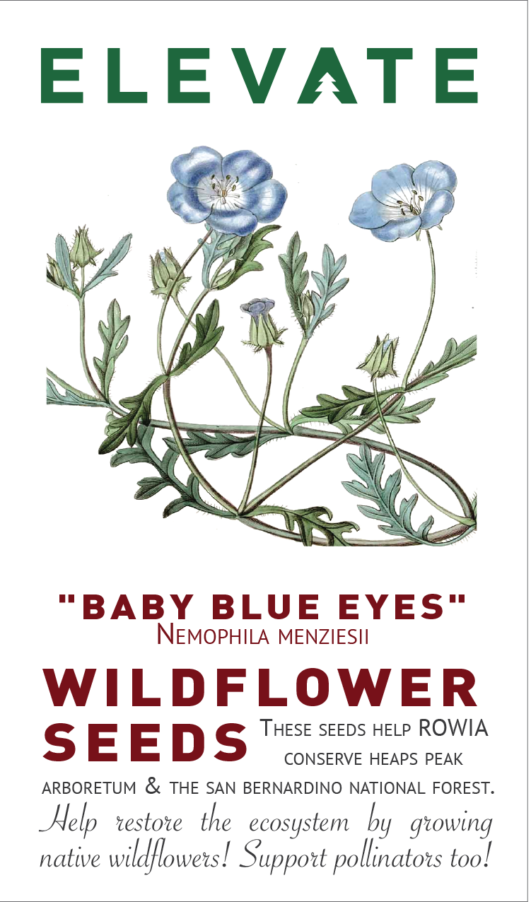 Wildflower Seeds - BABY BLUE EYES