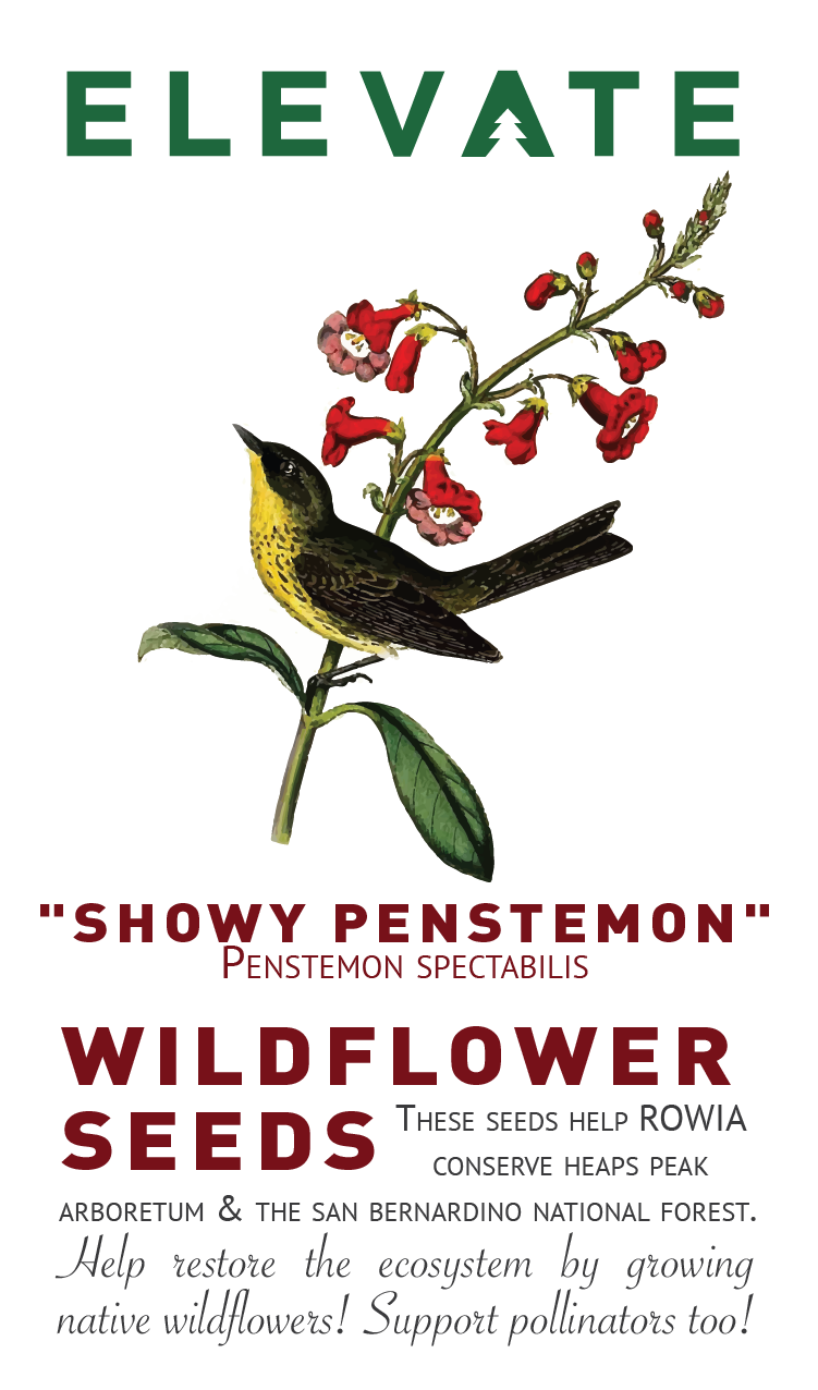 Wildflower Seeds - SHOWY PENSTEMON