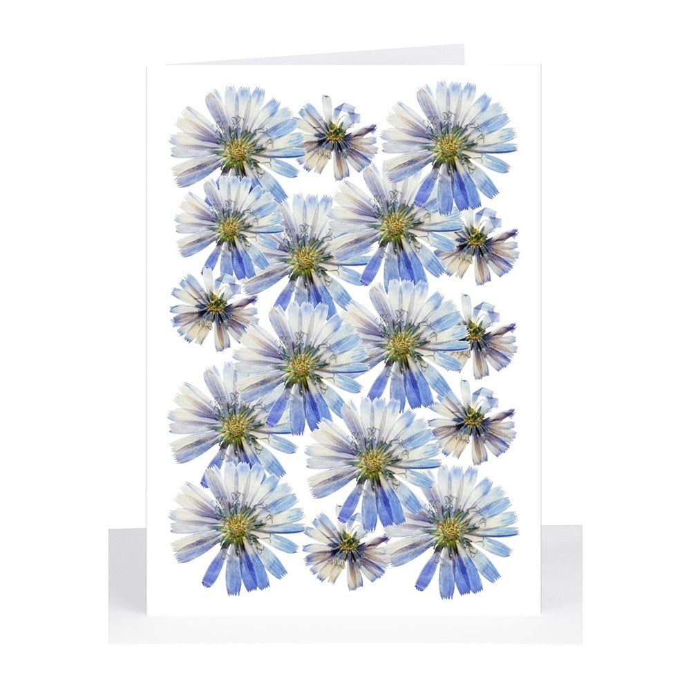 Lil's Cards - Blank small greeting card - Blue pressed daisies