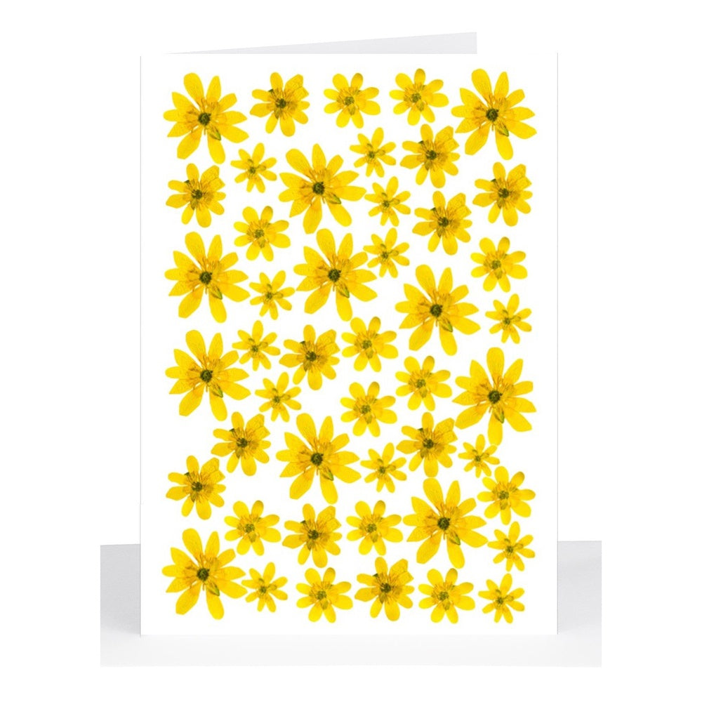 Lil's Cards - Blank small greeting card - Yellow pressed daisies