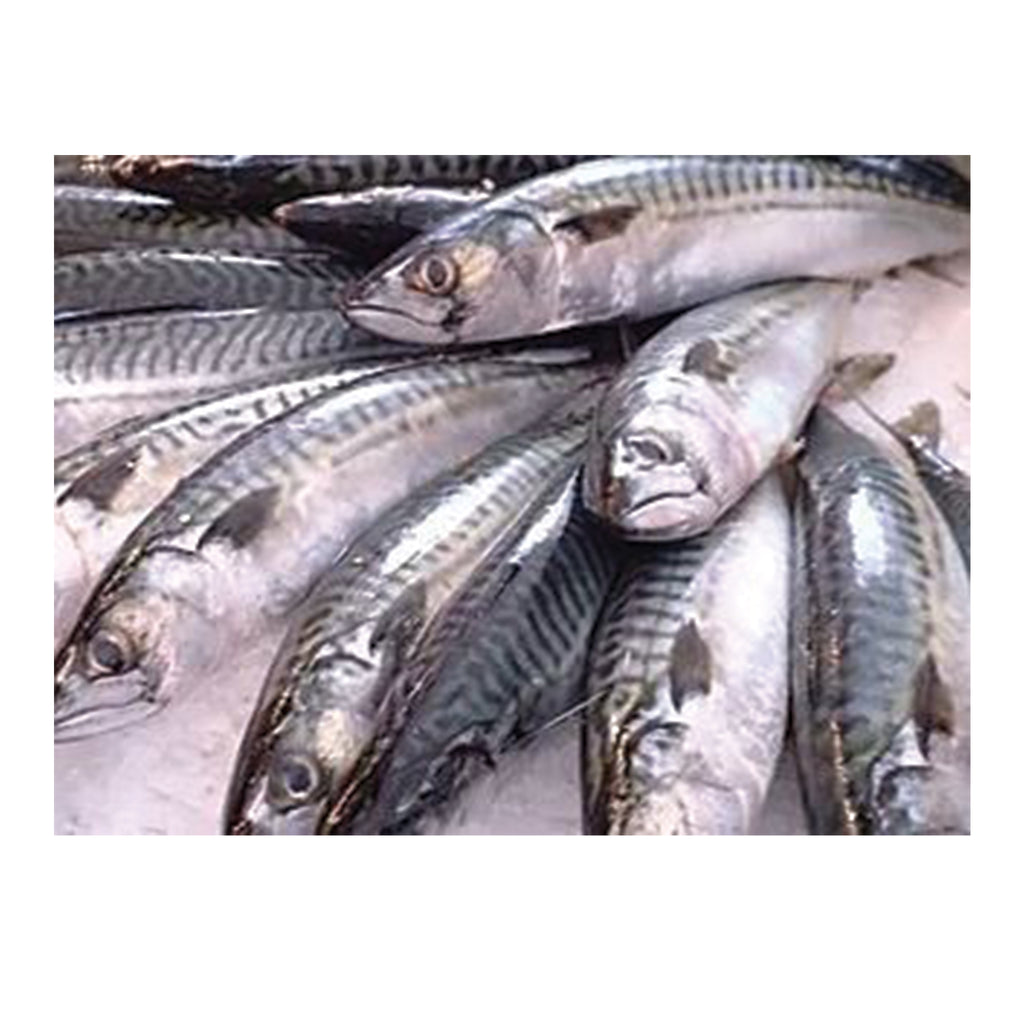 "Frozen Atlantic ""Boston"" Mackerel"