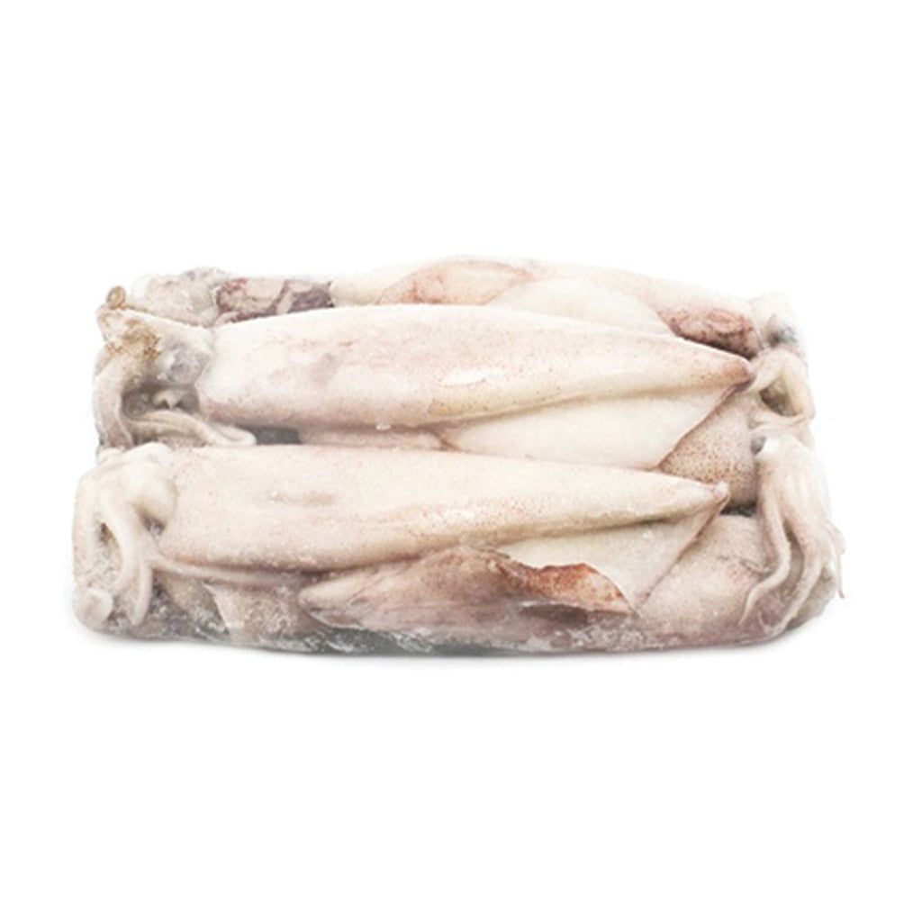 Frozen Local Squid 1lb Box or Poly Bag