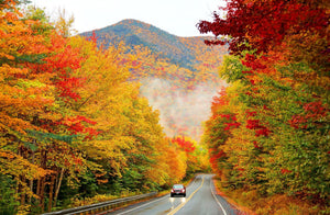 Fall foliage in bright colors photo by Denistangeyjr/Getty images