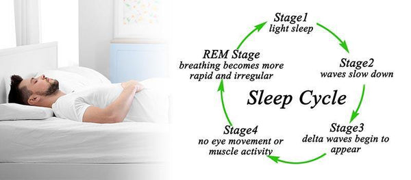 Sleep Cycle Explained - Sleepsia