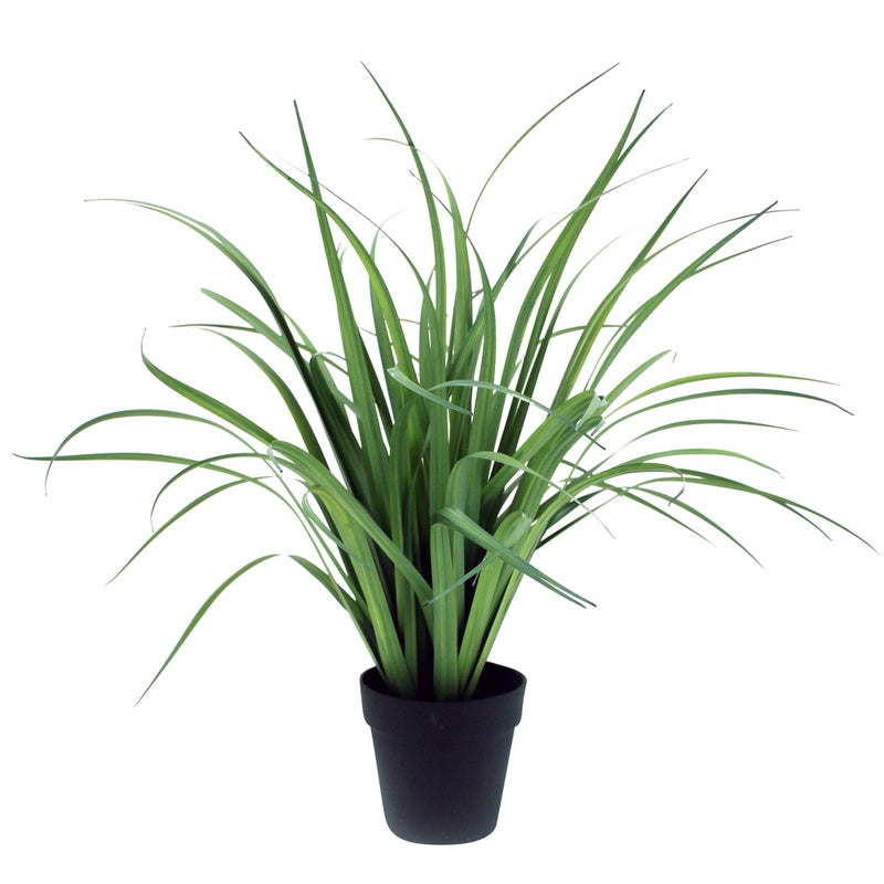 Grass Stalks in Pot