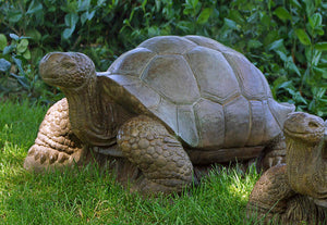 Large Turtle Tortoise