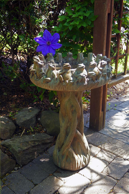Ring of Frogs Birdbath