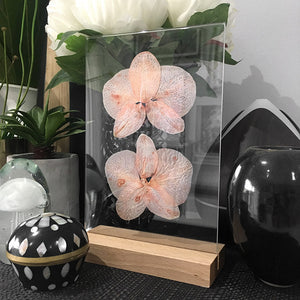 Clear Acrylic Photo Frame with Natural Wood Base, with some dry pressed orchids inside