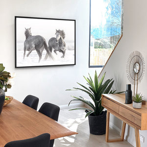 Grey Stallions Dancing Horse Duo B&W - Art Print