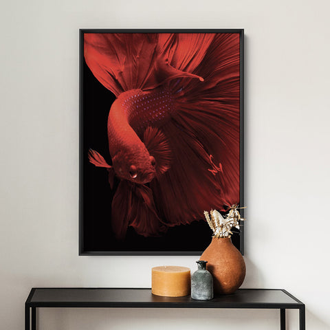Japanese Red Betta Fighting Fish - Art Print