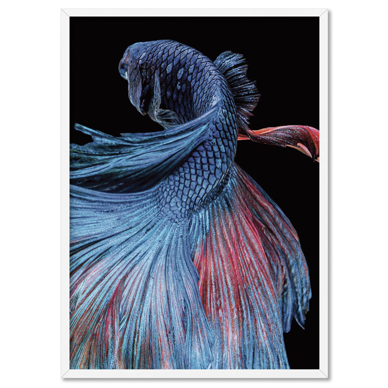 Japanese Red & Blue Betta Fighting Fish - Art Print, Stretched Canvas, or Framed Canvas Wall Art