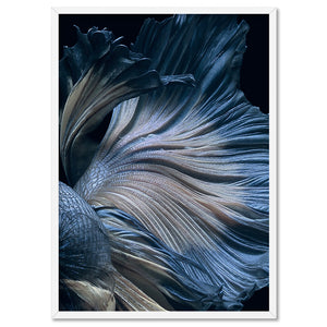 Japanese Blue Betta Fighting Fish - Art Print, Stretched Canvas, or Framed Canvas Wall Art