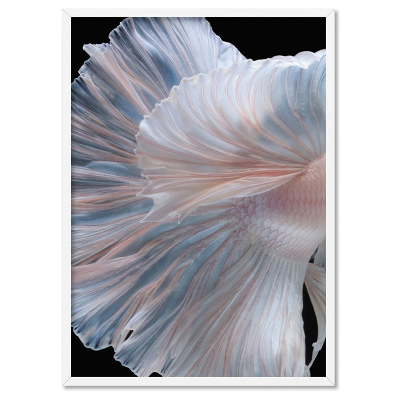 Japanese White II Betta Fighting Fish - Art Print