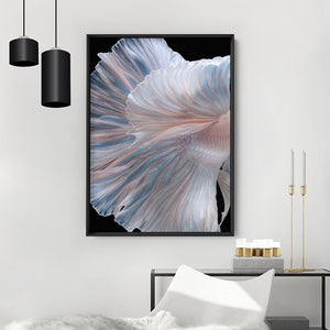 Japanese White V2 Betta Fighting Fish - Art Print